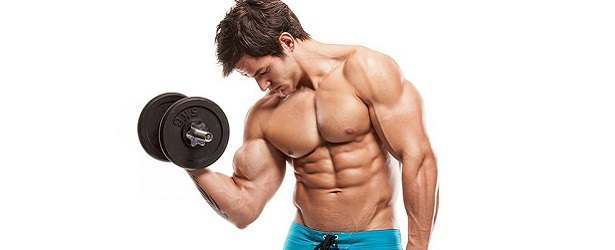 Nitric Oxide & Muscle